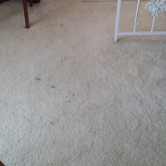 When to use carpet protector elite 20150624093429 solutioingenieria Image collections